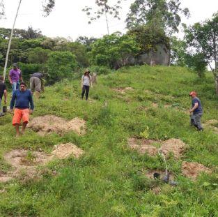 Plantio em Itapema
